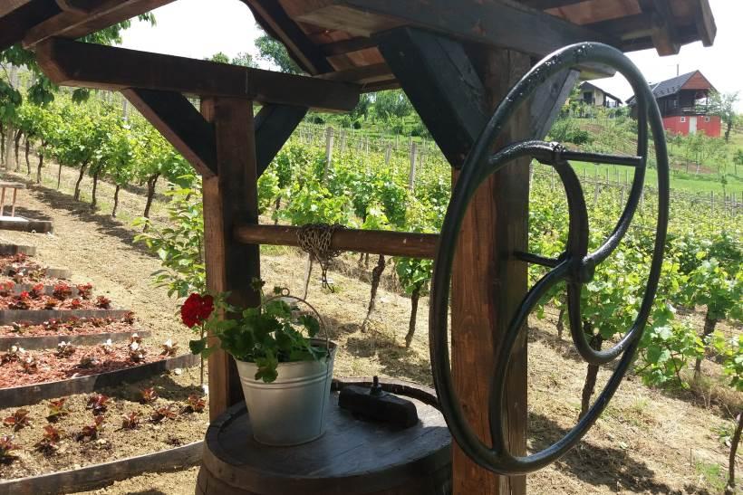 Izložba vina kontinentalne Hrvatske u Sv. Ivanu Zelini