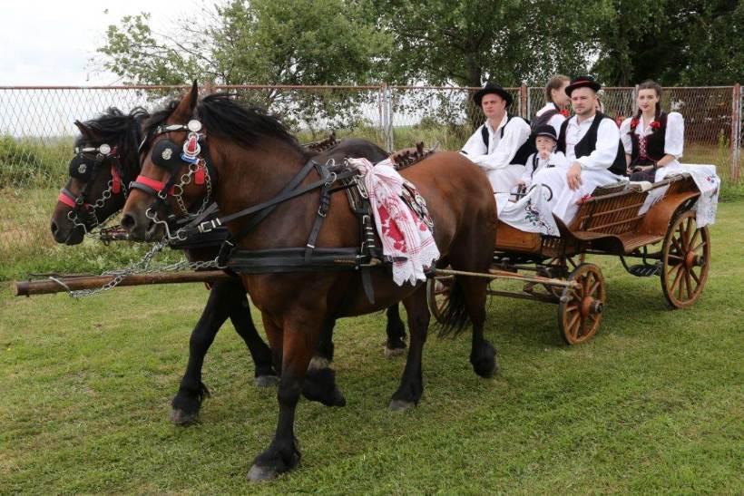 KLOŠTAR IVANIĆ: Održana izložba izvornih i zaštićenih pasmina hrvatskih konja [FOTO]