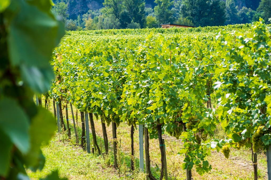 DALMACIJAVINO POZIVA U JEMATVU: Istrsi se i dobij svoje personalizirano vino!